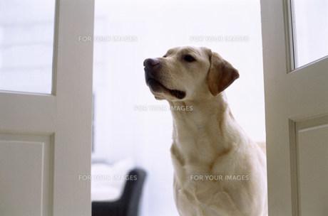 犬の素材 [FYI00960363]