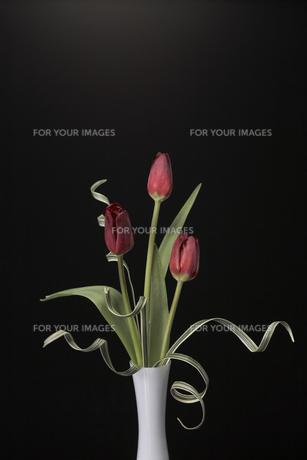 白い花器とチューリップの素材 [FYI00960436]