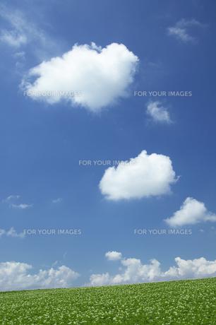 ジャガイモの花咲く丘と青空と雲の素材 [FYI00960437]