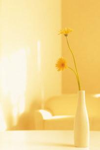 花瓶の花の素材 [FYI00960503]
