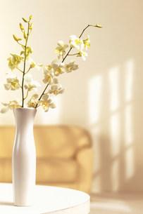 花瓶の花の素材 [FYI00960504]