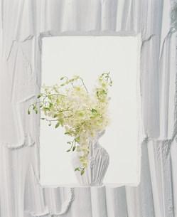 花の素材 [FYI00960591]