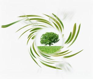 新緑イメージの素材 [FYI00960637]