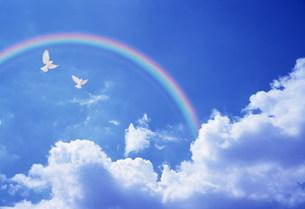 鳥と虹の素材 [FYI00960719]