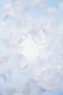 青い背景にたくさんの羽の素材 [FYI00961481]