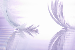 二個の白い羽根の素材 [FYI00961892]