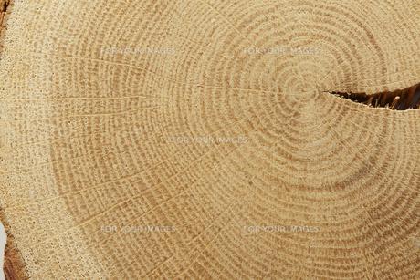 木の年輪の素材 [FYI00962996]