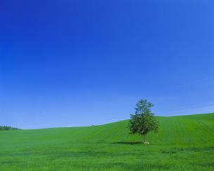 青空と牧草地に立つ一本の木の素材 [FYI00968921]