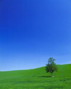 青空と牧草地に立つ一本の木の素材 [FYI00968961]