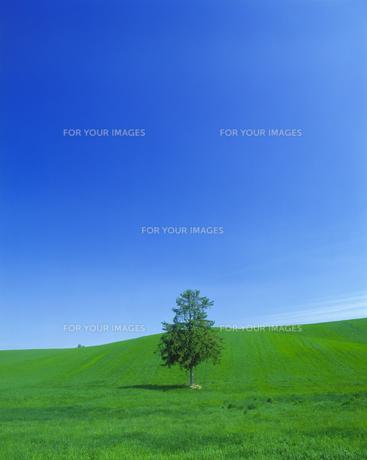 青空と牧草地に立つ一本の木の素材 [FYI00968966]
