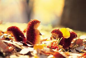 秋の落ち葉とリスの模型の素材 [FYI00969276]