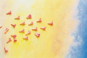 飛んでいる花びらの素材 [FYI00969579]