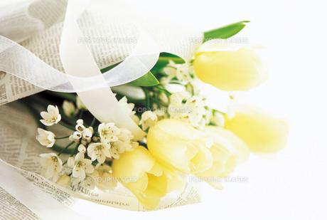 チューリップの花束の素材 [FYI00969625]