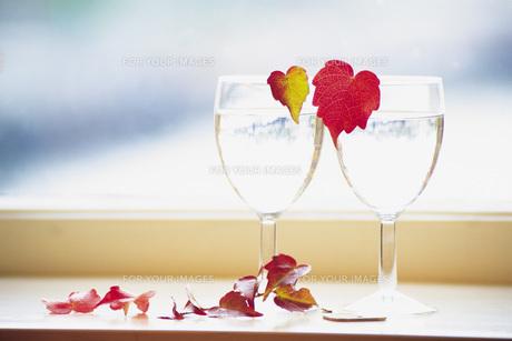 グラスと秋のアイビーの素材 [FYI00969633]