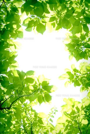 新緑の素材 [FYI00970302]