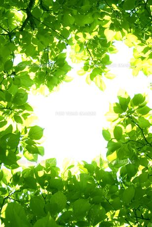 新緑の素材 [FYI00970349]