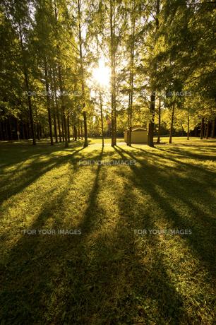 夕日と木のシルエットの素材 [FYI00971485]