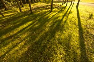 夕日と木のシルエットの素材 [FYI00971534]
