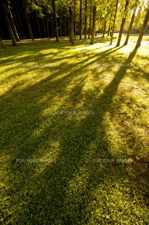 夕日と木のシルエットの素材 [FYI00971564]