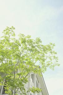 午後の光と庭木の素材 [FYI00975026]