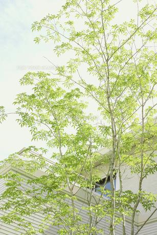 午後の光と庭木の素材 [FYI00975065]