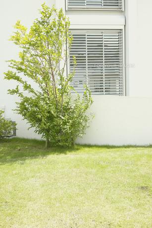 芝生のある住宅の素材 [FYI00975121]