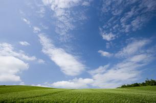 ジャガイモ畑と青空の素材 [FYI00975696]