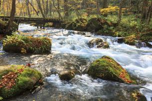 秋の奥入瀬渓流の素材 [FYI00979902]