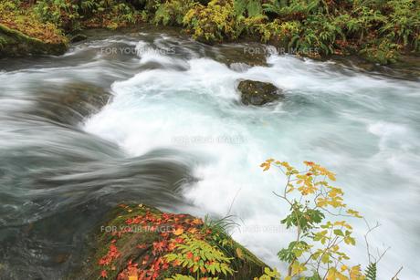 秋の奥入瀬渓流の素材 [FYI00979929]