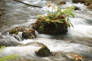 秋の奥入瀬渓流の素材 [FYI00979940]