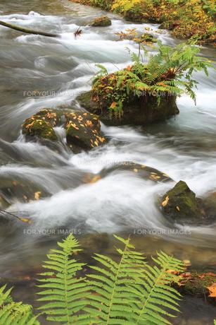 秋の奥入瀬渓流の素材 [FYI00979950]