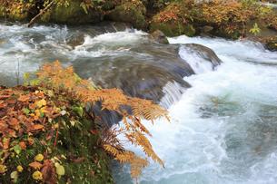 秋の奥入瀬渓流の素材 [FYI00979955]