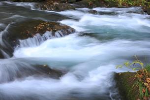 秋の奥入瀬渓流の素材 [FYI00979998]