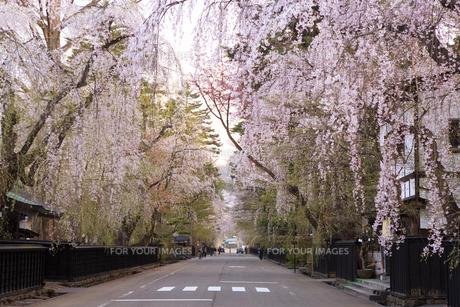 角館 武家屋敷の枝垂れ桜の素材 [FYI00980612]