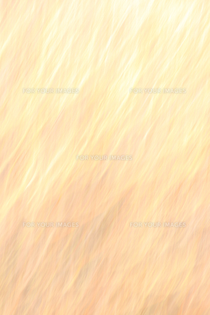 オレンジのバックグラウンドの素材 [FYI00981494]