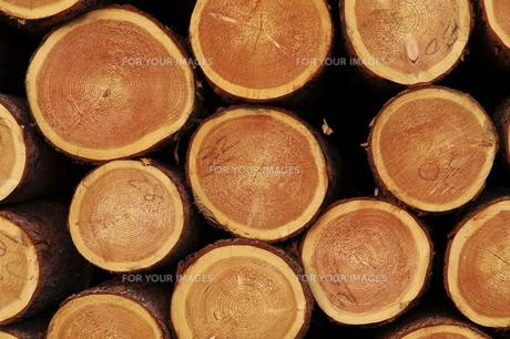 積み上げけられた木材の断面の素材 [FYI00981877]