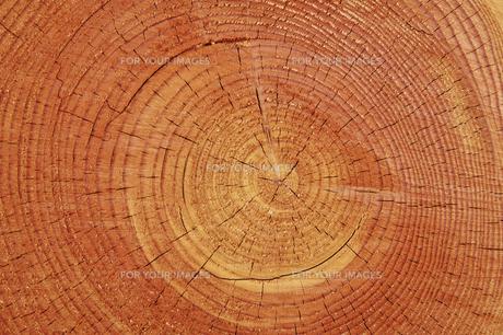 積み上げけられた木材の断面の素材 [FYI00981880]