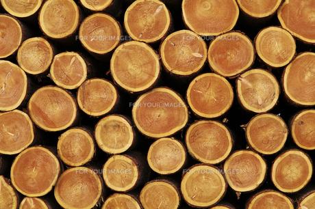 積み上げけられた木材の断面の素材 [FYI00981899]