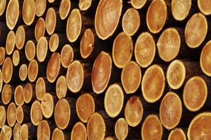積み上げけられた木材の断面の素材 [FYI00981971]