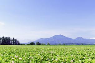 花咲くジャガイモ畑とニセコ連峰の素材 [FYI00982159]