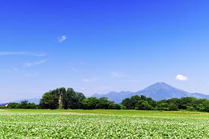 花咲くジャガイモ畑とニセコ連峰の素材 [FYI00982197]