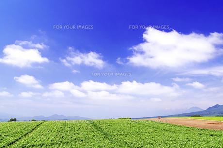 夏のジャガイモ畑の丘の素材 [FYI00982212]