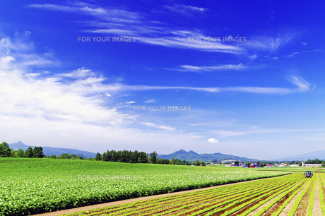 広大な初夏の田園風景の素材 [FYI00982232]