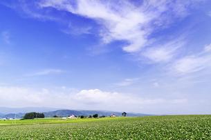広大な丘と花咲くジャガイモ畑の景観の素材 [FYI00982257]