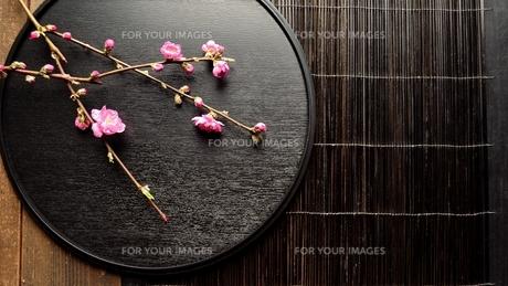 黒いおぼんの上の桃の花の写真素材 [FYI00986497]