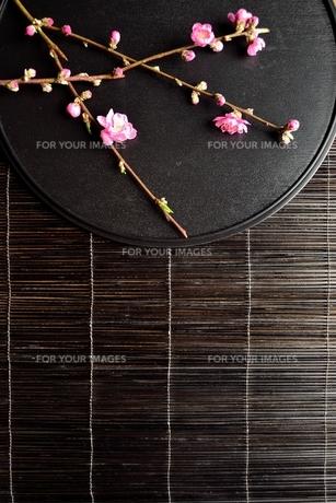 黒いおぼんの上の桃の花の写真素材 [FYI00986498]