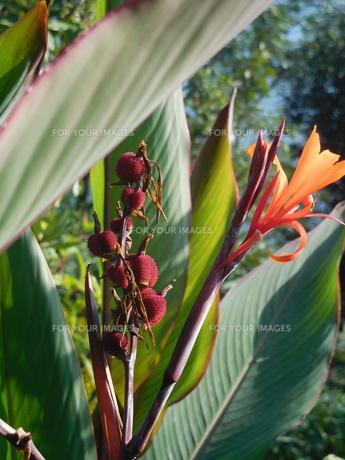 南国の花の写真素材 [FYI00986700]