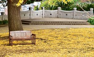 公園のイチョウの落ち葉とベンチの写真素材 [FYI00986800]