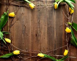 黄色いチューリップと枯枝のフレーム 黒木材背景の写真素材 [FYI00986839]