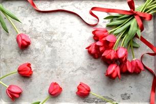 赤いチューリップの花束 銀色背景の写真素材 [FYI00986900]